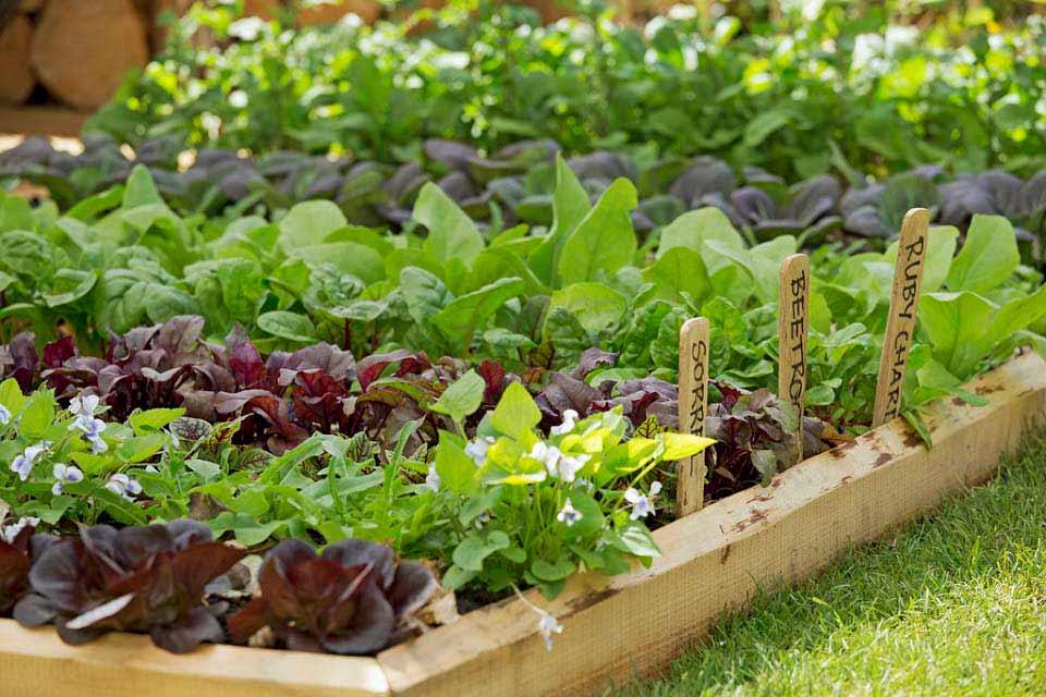 local, veggies, garden