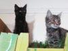 cats, pet rescue, juan de fuca, sooke