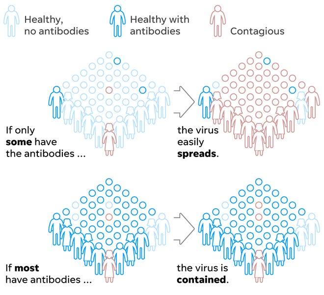 herd immunity, community immunity, COVID-19