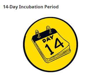 14-day incubation