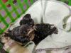barn swallows, BC SPCA, Wild ARC
