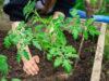 planting, gardening, food supply