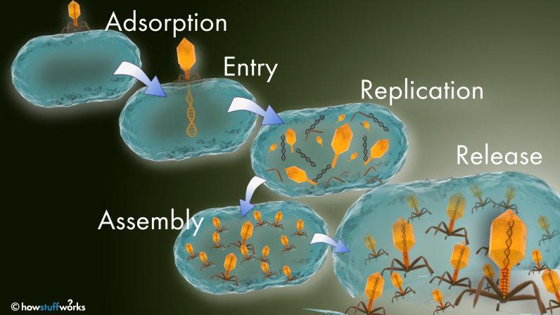 virus, method of infection