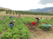 farm, workers, BC