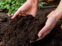 soil, hands