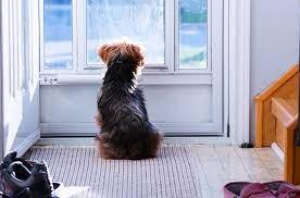 dog, door