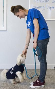 pandemic puppy, dog, training