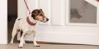 dog, leash