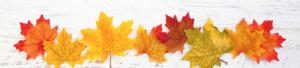 thanksgiving, leaves